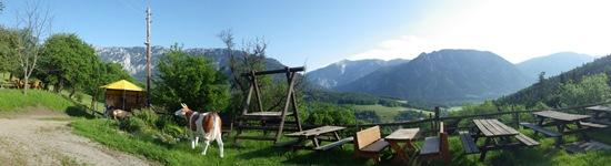 Foto zur Veranstaltung musikalische Kräuterwanderung beim BaBioL Reichenau